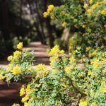 fleurs Parc du Labyrinthe d'Horta