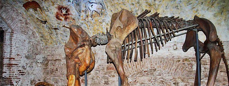 Musée du Mammouth