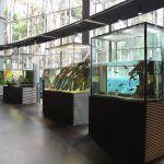 collection CosmoCaixa Barcelone
