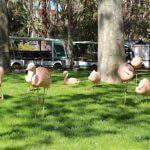 flamants Zoo Barcelone