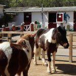 poneys Zoo Barcelone