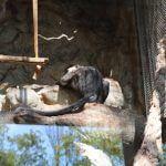 primate Zoo Barcelone