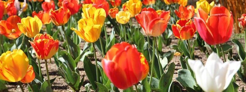 fleurs parc de Montjuïc