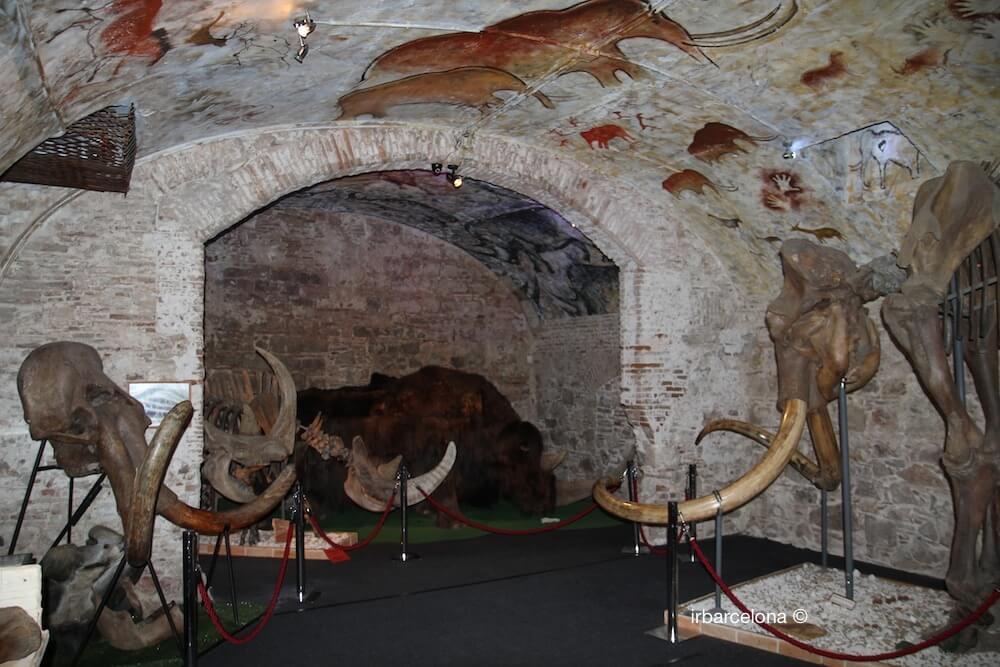 salle Musée du Mammouth
