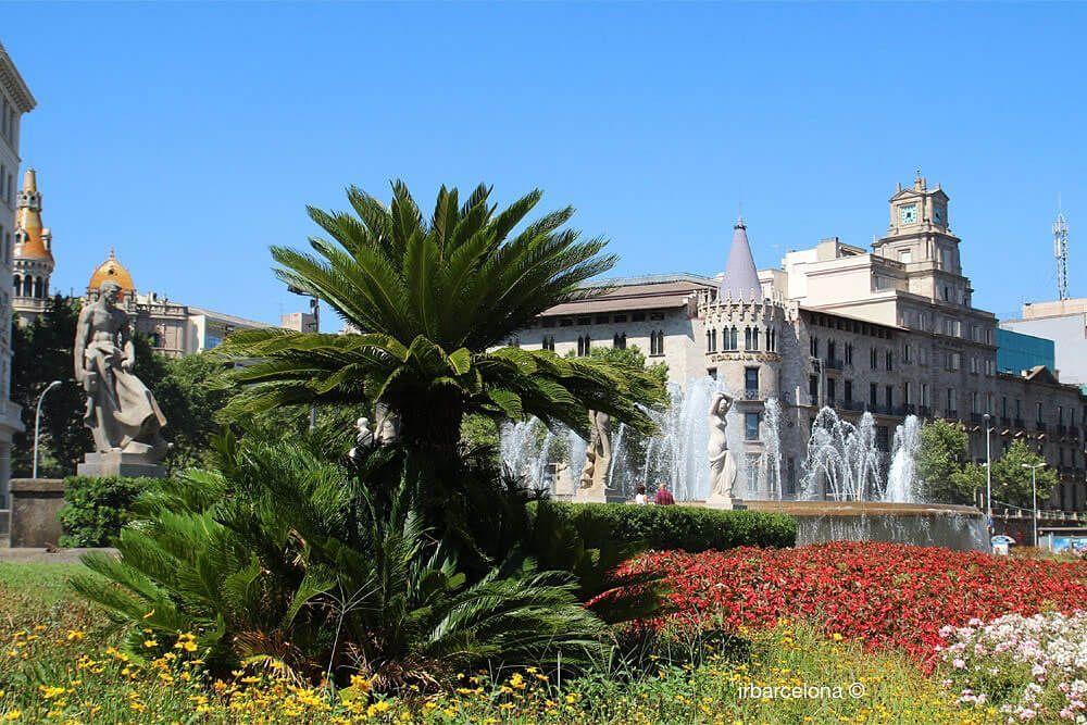 plantes et fleurs sur la Plaça de Catalunya