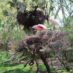 volière Zoo Barcelone