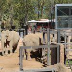éléphants Zoo Barcelone