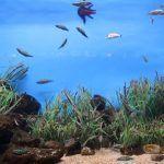 poisson Aquarium de Barcelone
