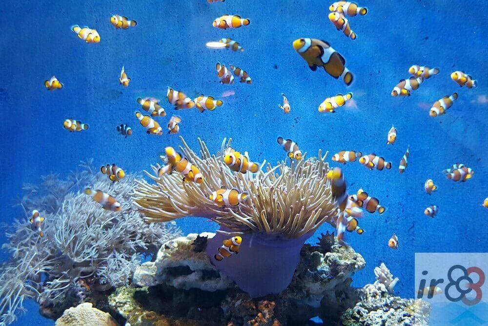 acheter billets Aquarium Barcelone