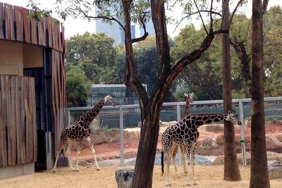 acheter billets Zoo Barcelone