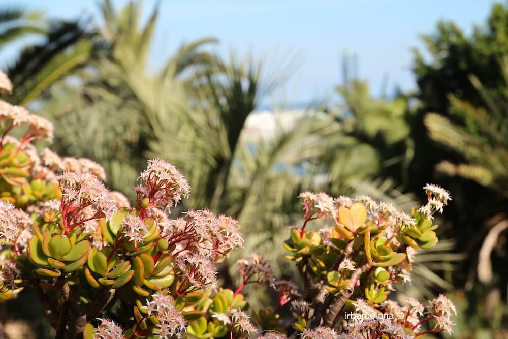 détail jardins Mossèn Costa i Llobera