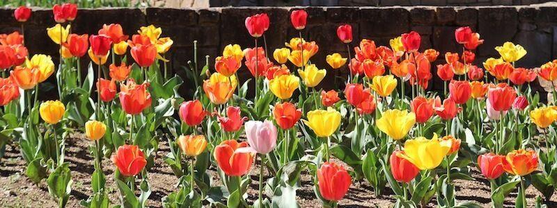 fleurs Jardins Mossèn Cinto Verdaguer