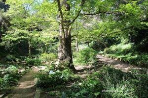 Jardin Botanique Historique de Barcelone