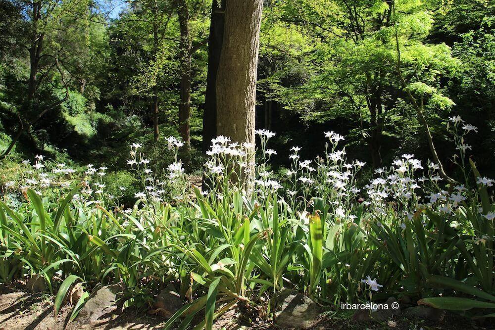 plantes jardin botanique historique