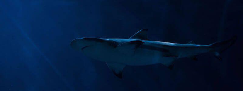 Plongée avec requins Aquarium